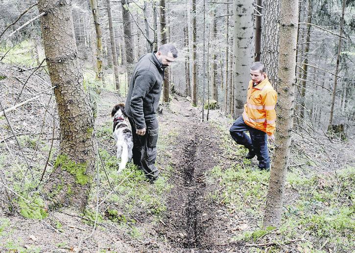 Die Höhronen-Wälder sind für Biker ein  Geheimtipp – mit unliebsamen Folgen